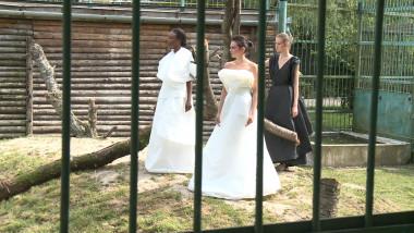 Prezentare de modă în cușca leilor