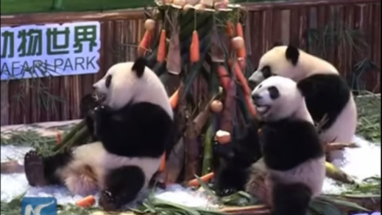 aniveresare panda tripleti