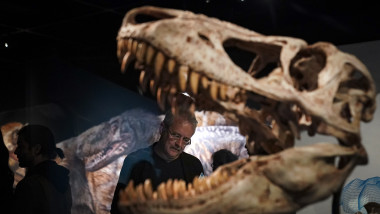 New Exhibition At NYC's Museum Of Natural History Celebrates Tyrannosaurus Rex