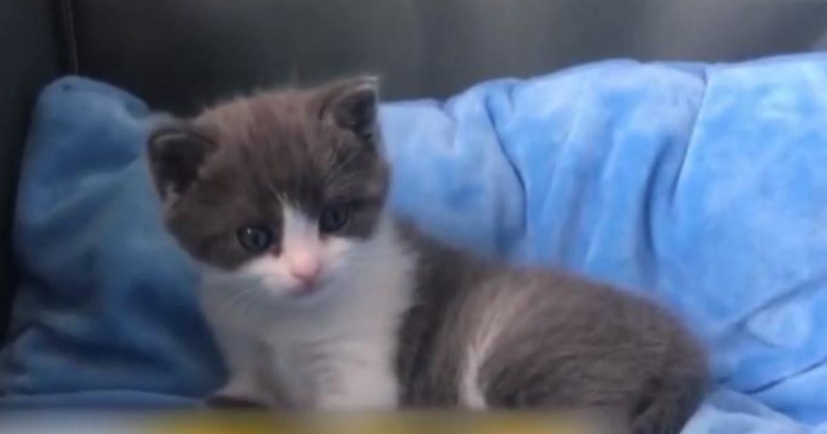 Un IT-ist și-a programat pisica să toarcă Bitcoin