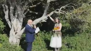 casatorie cu un copac