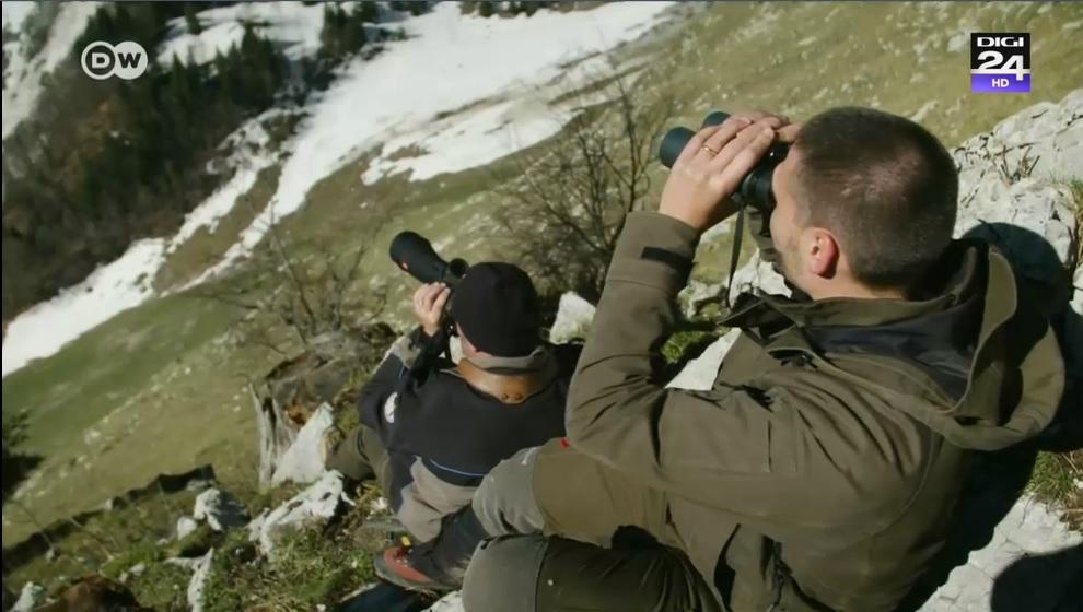 Cum au facut niste braconieri un bine faunei din Elvetia