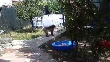 maimuta in curte