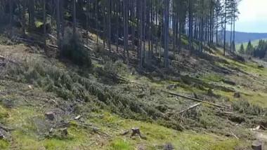 padure furt copaci