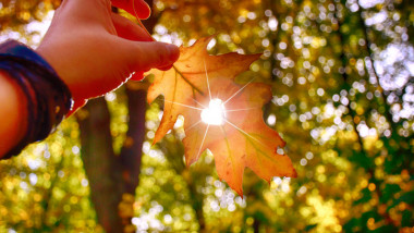 I love autumn. Close up shot of hand holding yellow leaf.