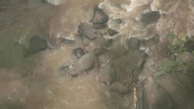 elefanti-morti-la-baza-cascadei-thailanda