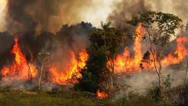 incendii Amazon