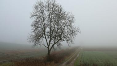 Cod galben de ceata