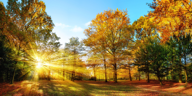 """Urgenta climatica: Cel mai cald octombrie inregistrat vreodata. """"Nu ne-a mai ramas decat sa incercam sa sa ne adaptam"""""""