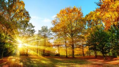 peisaj de toamna soare pomi