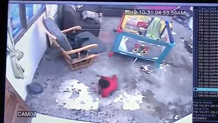 VIDEO. Cum a reusit o pisica cu chef de joaca sa salveze viata unui bebelus