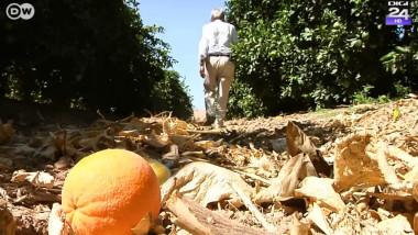 portocala pe jos - focus