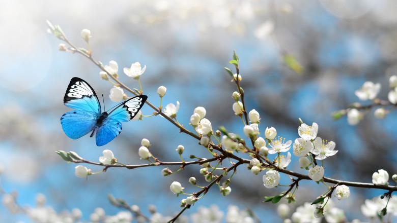 fluturi pomi muguri flori primavara meteo vreme soare