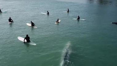 balena uriasa