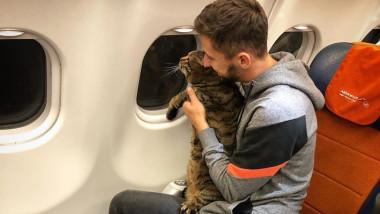 pisica aeroflot
