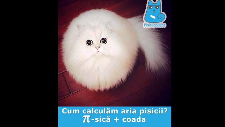 pisica arie bun