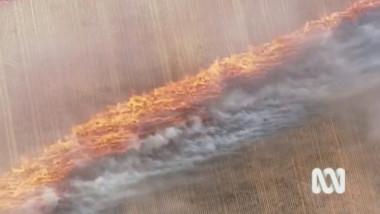 foc australia