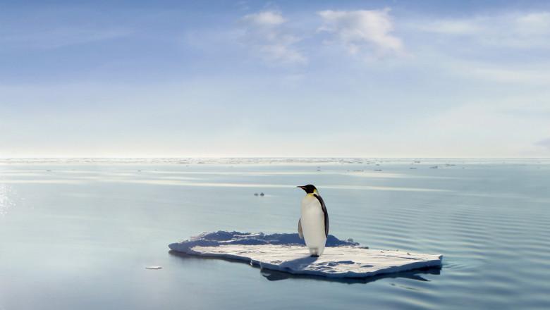 pinguin incalzire globala schimbare climatica
