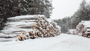 taieri arbori padure ilegale mediu
