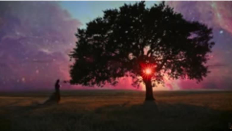 Copacul vieții din Munții Măcinului apare într-un videoclip al DJ-ului Armin van Buuren