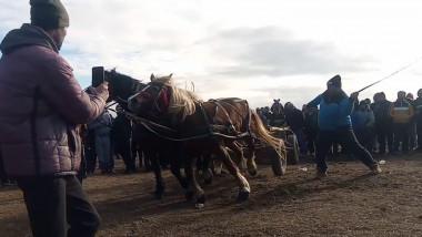 cai cronica-gaestiului
