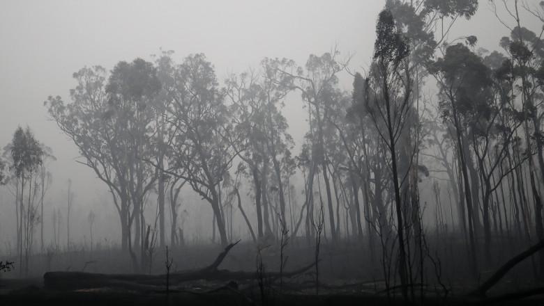 Victorian Bushfire Coverage TBC