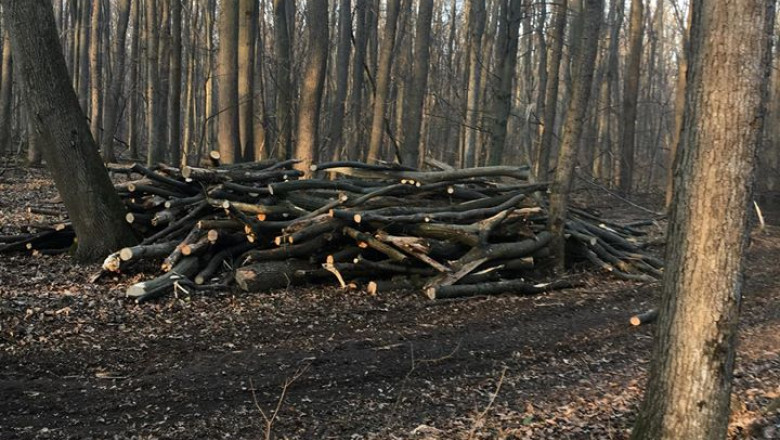 copaci-taiati-padurea-baneasa