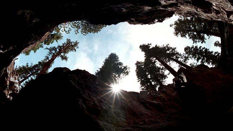 copaci inalti australia