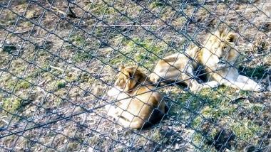 zoo resita