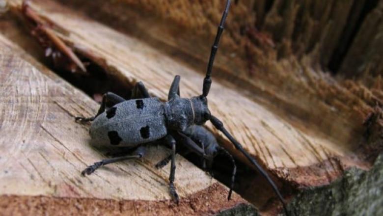 ascunderea gândacului de vierme
