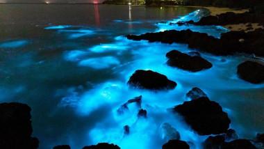 alge-bioluminescente-albastre-twitter