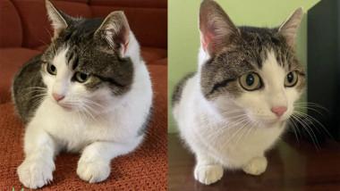 pisica Rusia