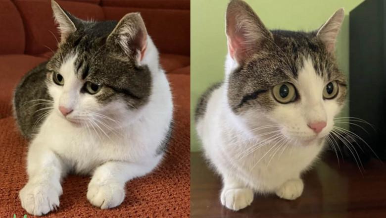 Cum să faci ridicol de mulţi bani din idei ridicol de simple: Pozele cu pisici