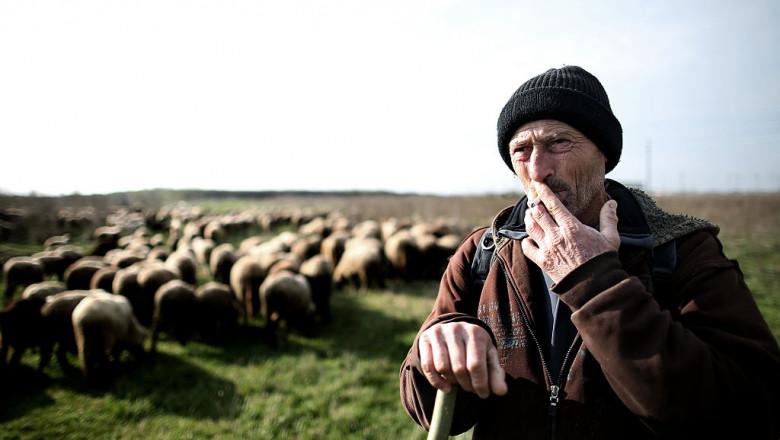 cioban român cu oi