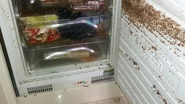 apartament devastat de chirias