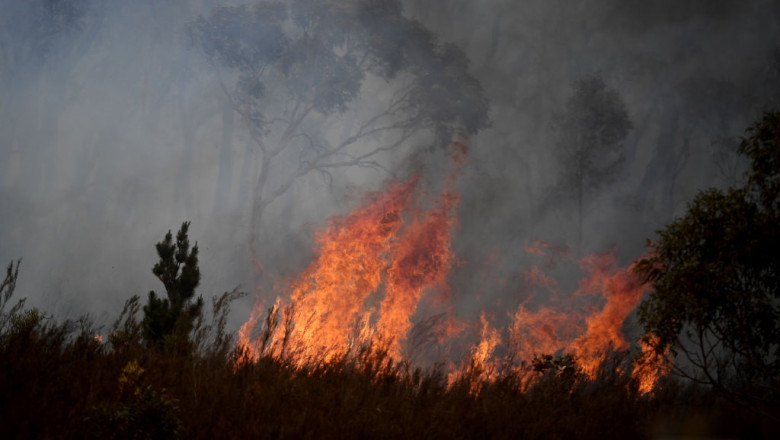 Fire Crews Work To Bring Tallaganda National Park Bushfire Under Control