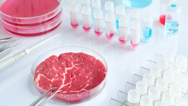 Meat sample in open disposable plastic cell culture dish in modern laboratory or production facility
