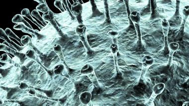 Coronavirus, artwork