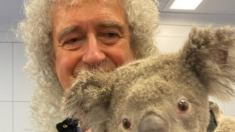 Brian May a facut fotografii alaturi de un urs koala, in Australia