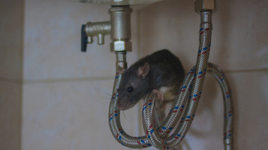 plumbing concept. decorative black mouse on water