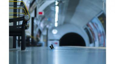 soareci metrou