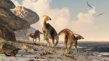 Parasaurolophus on a Beach