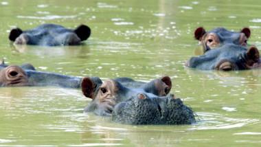 hipopotami Pablo Escobar