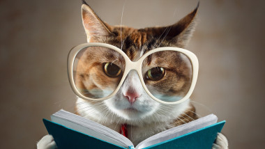 Cat in glasses holding a turquoise book and strictly looks into the camera. Concept of education
