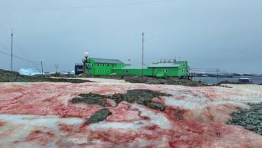 Zăpada dintr-o regiune din Antarctica a devenit roșie. Cum afectează mediul înconjurător