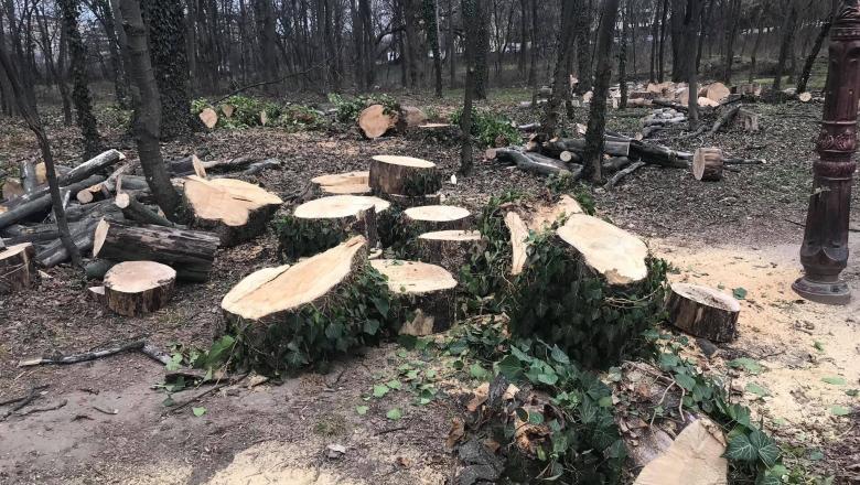arbori taiati herastrau Foto Facebook Fundația Eco-Civica
