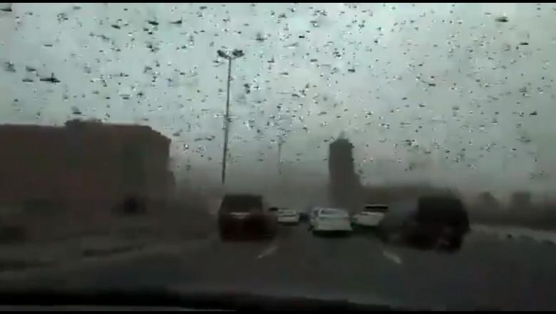 invazie-de-lacuste-bahrain-captura-twitter