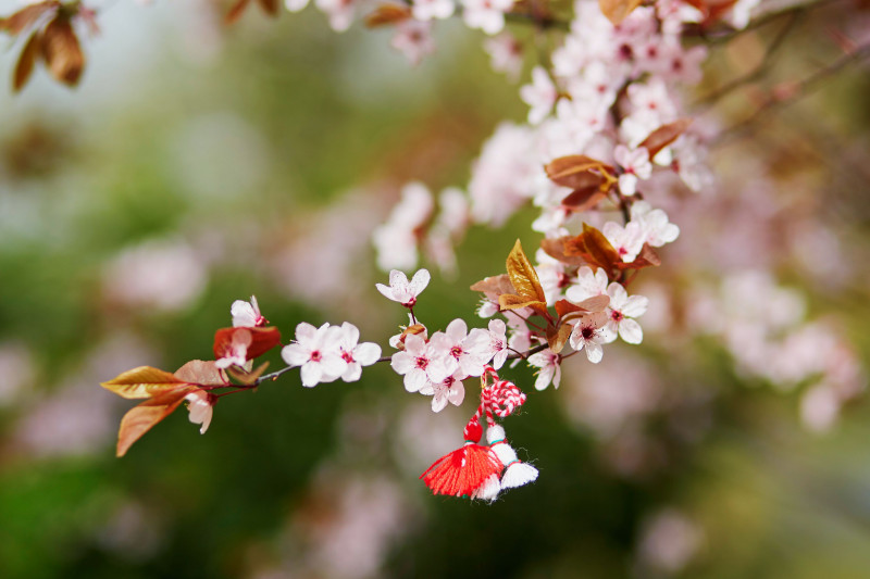 Branch of cherry tree with martisor, traditional symbol of the first spring day