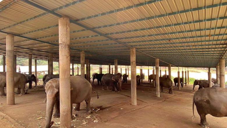 elefanti-infometati-thailanda-profimedia-0510826918