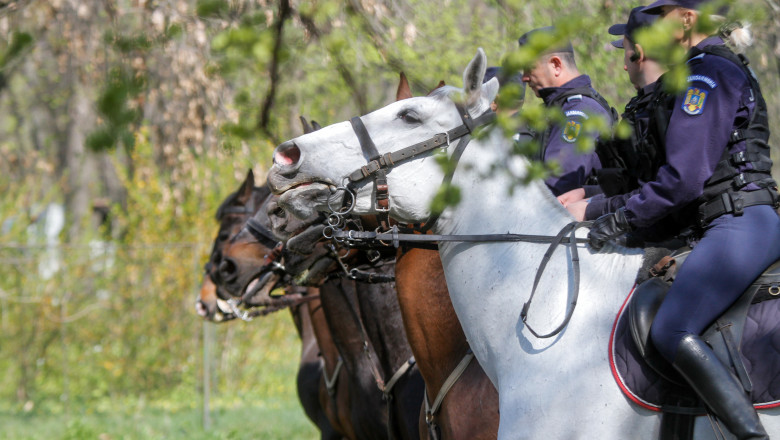 inquam - jandarmi călare cai